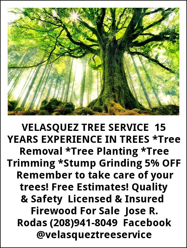 15 Years Experience in Trees