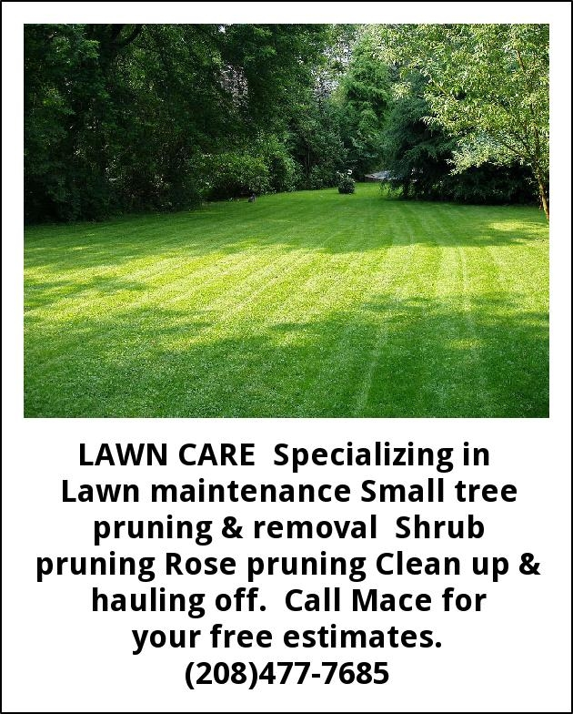 Small Tree Prunning & Removal
